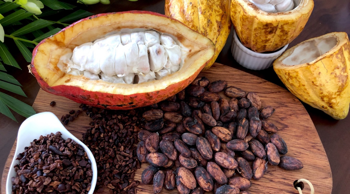 Let's get start the new Cacao Journey!